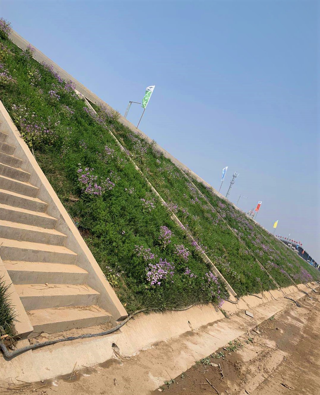 3   京雄城际铁路路基边坡生态防护试验段效果.jpg